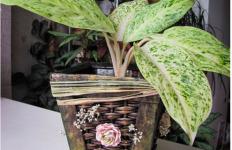 ukrasna saksija za cveće