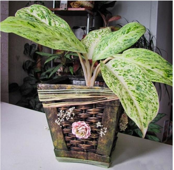 Saksija za cveće od papira i kartona