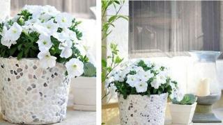 naslovnasaksija za cveće gotova