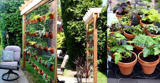 zeleni-zid-od-biljaka