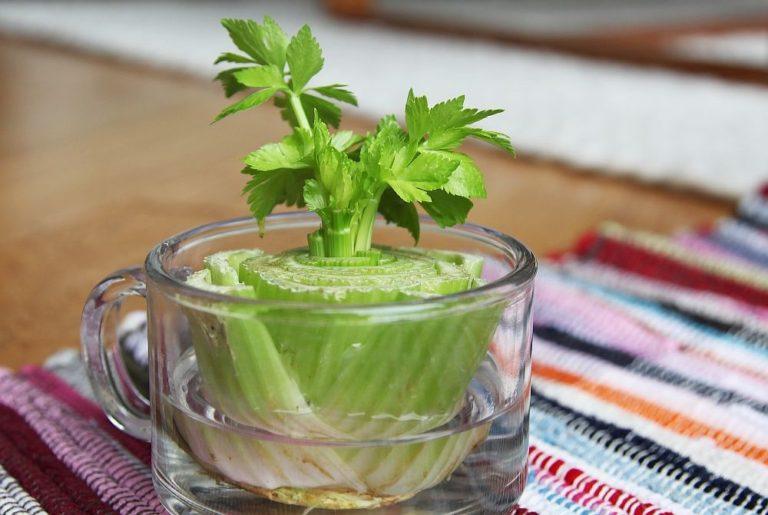 biljke-celer