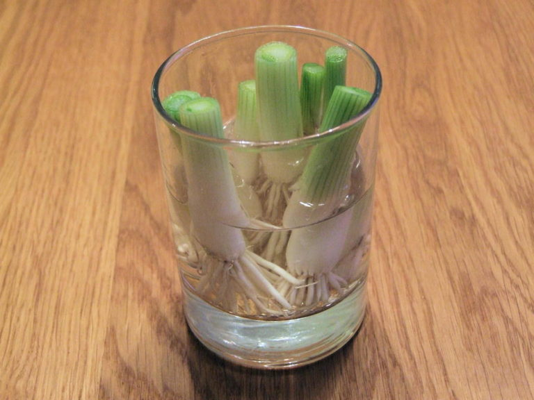 biljke-mladi-luk