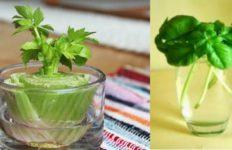 biljke-ponovno-uzgajanje