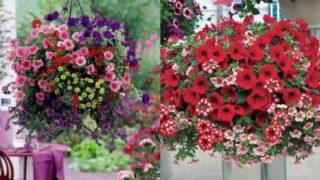 viseća-korpa-sa-cvećem